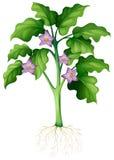 在植物的紫色花 皇族释放例证