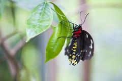 在植物的蝴蝶 免版税库存照片