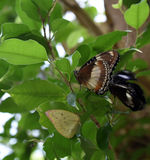 在植物的蝴蝶 库存图片