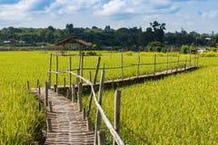 在植物米的木桥梁 免版税库存图片