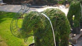 在植物罐的修剪的花园大象在construstion站点 绿叶风景设计观念 与植物的公园重建 股票录像