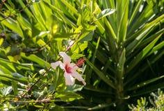 在植物群的好的看法从罗希姆诺,克利特,希腊 免版税库存图片
