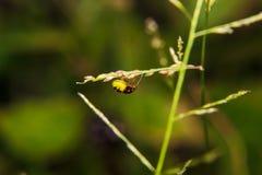 在植物词根的臭虫  免版税库存照片