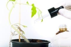 从在植物,轻的背景的吸移管投下水滴 库存照片