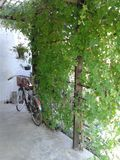 在植物绿色背景的自行车边 免版税库存照片