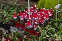 在植物doorfestive显示的欢乐圣诞节花圈在哥伦比亚路花市场上, 库存图片