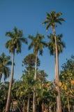 在植被中的高和叶茂盛棕榈树在一个方形的庭院里在晴天在圣曼努埃尔 免版税库存图片
