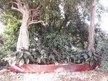 在植被中间的一个原始的花瓶 库存照片