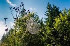 在植被的蜘蛛网 免版税库存图片