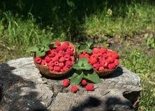 在椰子壳的莓在大麻在庭院里 图库摄影