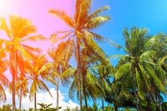 在椰子树树的充满活力的过滤器 与掌上型计算机的热带横向 免版税库存图片