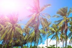 在椰子树树的桃红色阳光 与掌上型计算机的热带横向 免版税库存图片