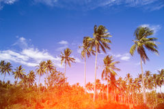 在椰子树树的橙色光 与掌上型计算机的热带横向 库存图片