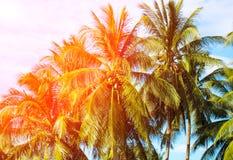 在椰子树树的橙色火光 与掌上型计算机的热带横向 免版税库存图片