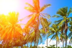 在椰子树树的橙色火光 与掌上型计算机的热带横向 库存照片