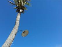 在椰子树的轻的灯 库存照片