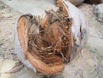 在椰子粗硬纤维的椰子壳在热带剥堆壳 库存照片