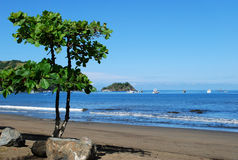 在椰树海滩的树 图库摄影