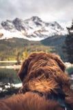 在楚格峰前面的狗 免版税库存照片