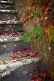 在楼梯的叶子 库存照片