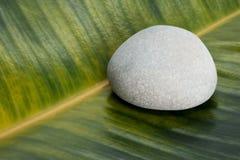 在榕属叶子背景的灰色石头 库存照片