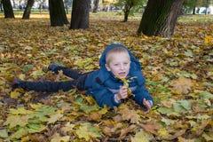 在槭树叶子上在公园 免版税图库摄影