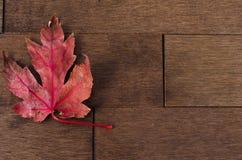 在槭树地板的唯一红槭叶子 图库摄影