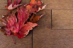 在槭树地板的多片红槭叶子 图库摄影