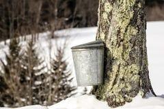 在槭树的传统树汁桶在佛蒙特 免版税图库摄影