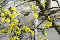 在槭树的污染塑料 免版税图库摄影