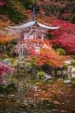 在槭树的美丽的Daigoji寺庙, momiji季节,京都,日本 免版税库存图片