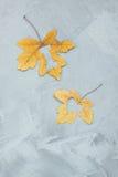 在槭树的i爱上写字在具体背景离开 免版税库存图片