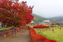 在槭树走廊的秋天叶子在Kawaguchiko 图库摄影