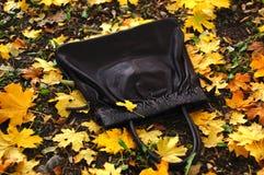 在槭树金黄下落的秋叶报道的地面上的黑提包  翠菊许多秋天的紫红色心情粉红色 免版税库存照片