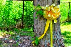 在槭树附近被栓的黄色丝带 免版税库存照片
