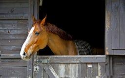 马喷鼻息 库存照片
