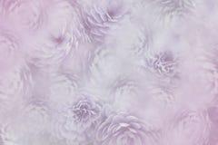 在模糊的桃红色背景的Flowesr 紫罗兰色白的花菊花 花卉拼贴画 背景构成旋花植物空白花的郁金香 库存照片