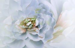 在模糊的桃红色黄色背景bokeh的花 桃红色白的花菊花 花卉拼贴画 背景构成旋花植物空白花的郁金香 库存照片