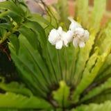 在模糊的绿色的白色兰花离开背景 图库摄影