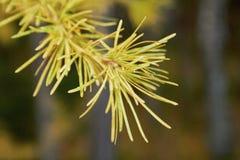 在模糊的背景的秋天花卉概念 图库摄影
