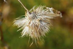 在模糊的背景的秋天花卉概念 库存照片