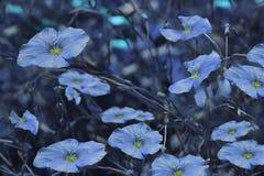 在模糊的蓝色背景的蓝色花 背景细部图花卉向量 在草的蓝色野花 免版税库存照片