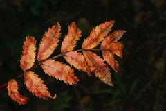 在模糊的黑暗的背景的秋天花卉概念 库存图片