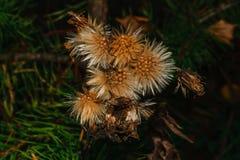 在模糊的黑暗的背景的秋天花卉概念 免版税库存图片