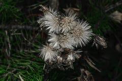 在模糊的黑暗的背景的秋天花卉概念 库存照片