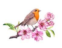 在樱桃或苹果花的鸟 春天开花,佐仓分支 水彩 向量例证