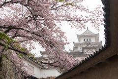 在樱桃blooson佐仓开花的白色城堡姬路城 库存照片