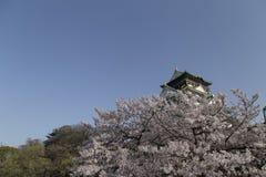 在樱花中的大阪城堡在一好日子 库存照片