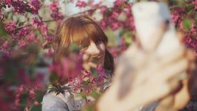 在樱花佐仓树春天桃红色中的美丽的年轻红发妇女开花做selfie在日落的智能手机 股票录像