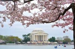 在樱花期间的杰斐逊纪念品 库存照片